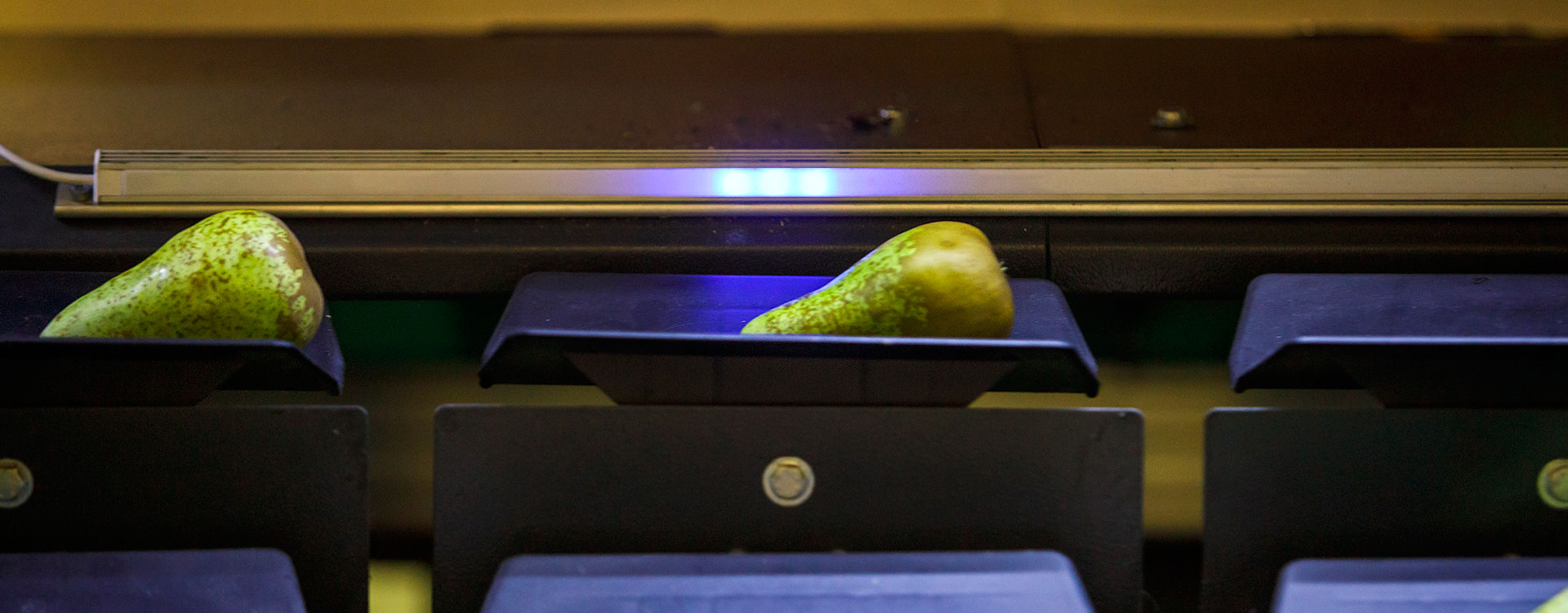 Frutas Pisón | Zetapack